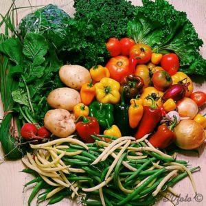 edible earth bounty