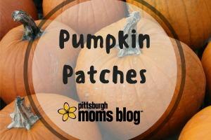 pumpkin-patches300x200