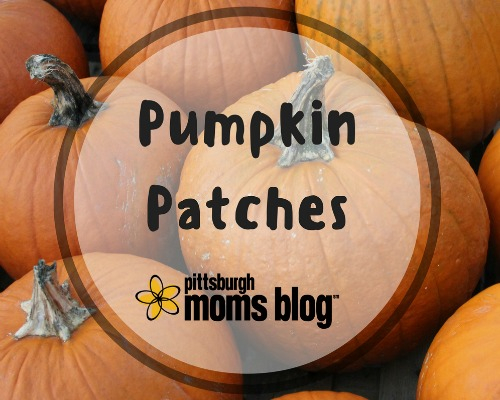 pumpkin-patches500x400