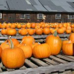 October 26th is National Pumpkin Day