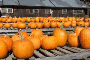 pumpkins-2-1322318