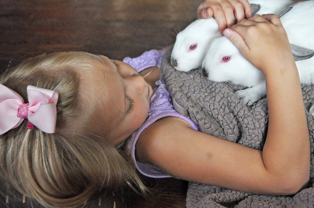 rabbits 101 what you need to know about this indoor pet
