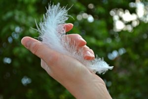 feather-1078424_1920